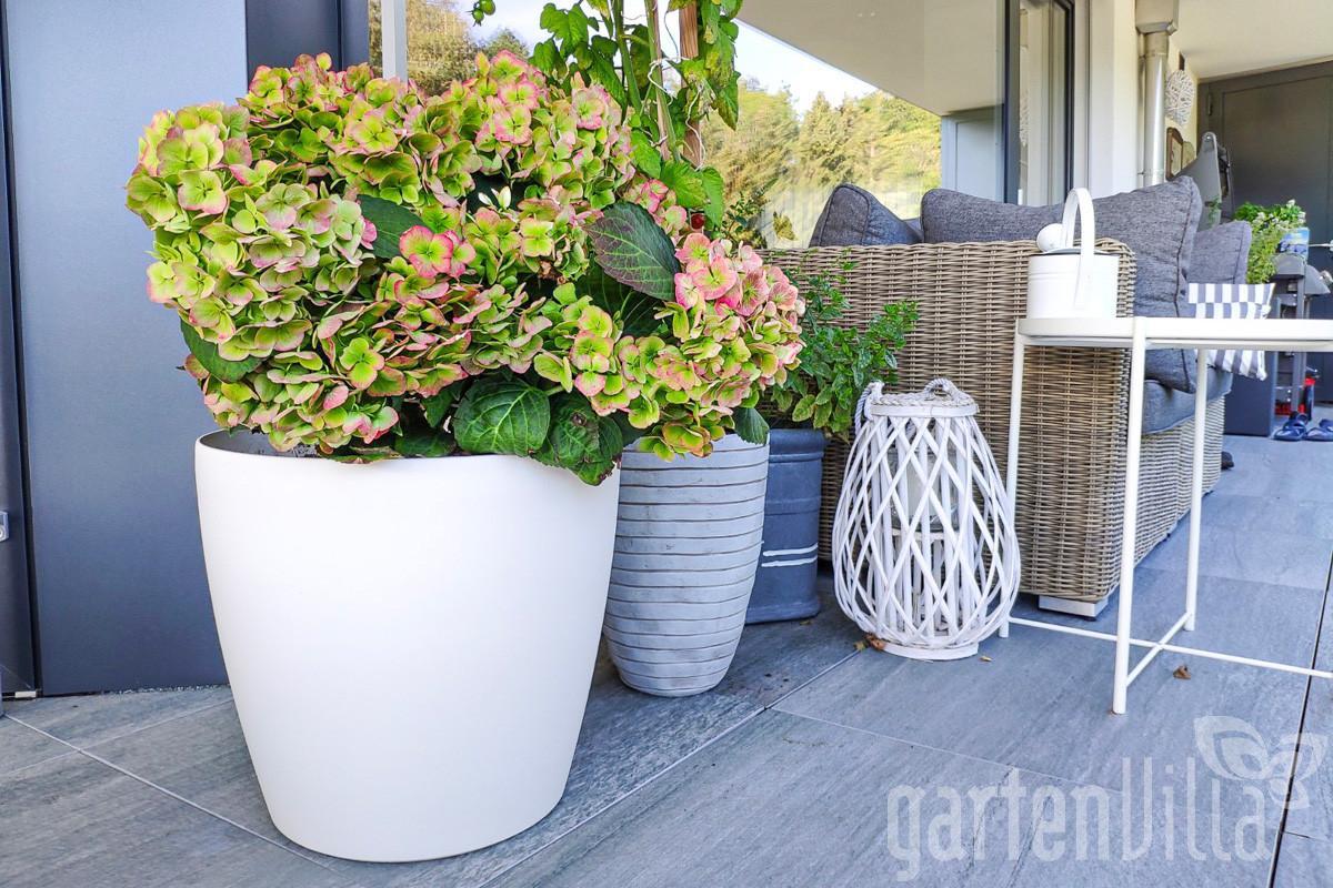 Gartentipp März 2020: Der passende Topf für jede Pflanze
