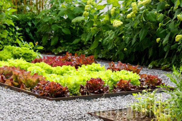 Gartentipp August 2020: Gemüse- und Kräuteraussaat im August