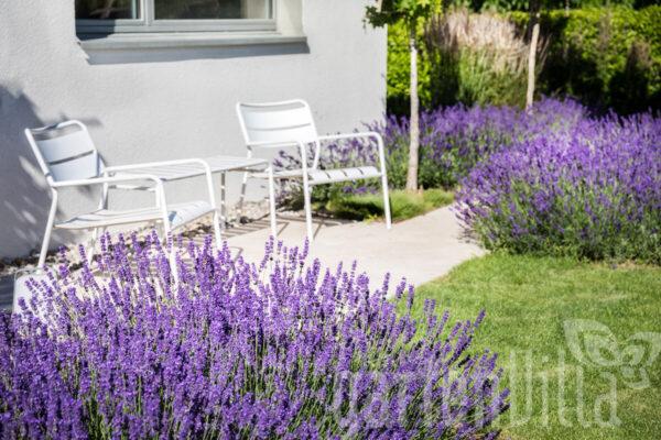 Gartentipp Juni 2020: Blaue und violette Blüten für das Aussenwohnzimmer