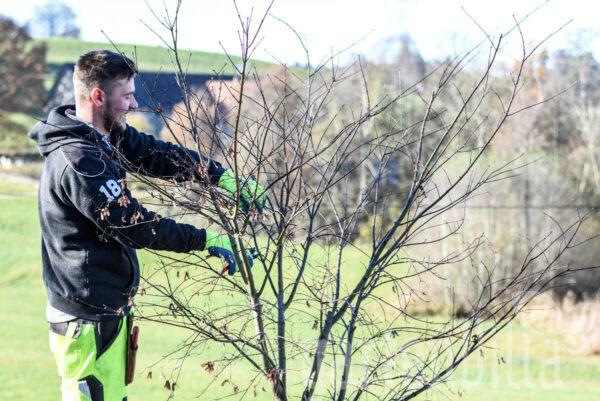 Gartentipp Januar 2021: Darum ist ein Winterschnitt sinnvoll